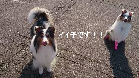 MOV_5774(7).jpg