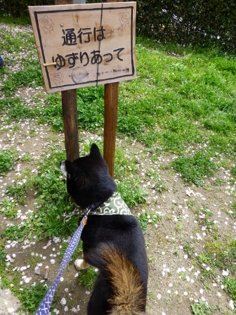 お花見~元茨木川緑地~17