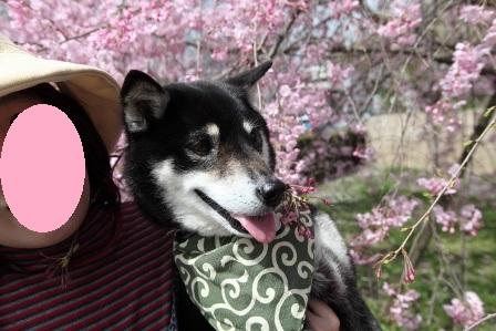 お花見~元茨木川緑地~32