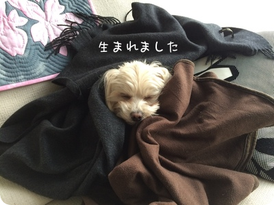 2015022423163303b.png
