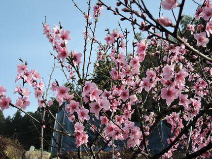 momonohana321.jpg