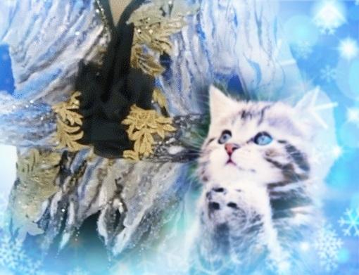 0y66-cat222j.jpg