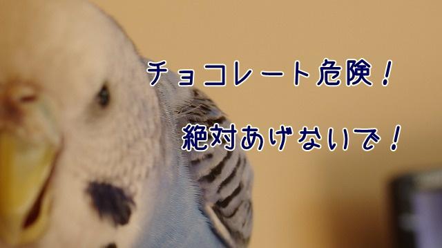 s-IMGP0016.jpg