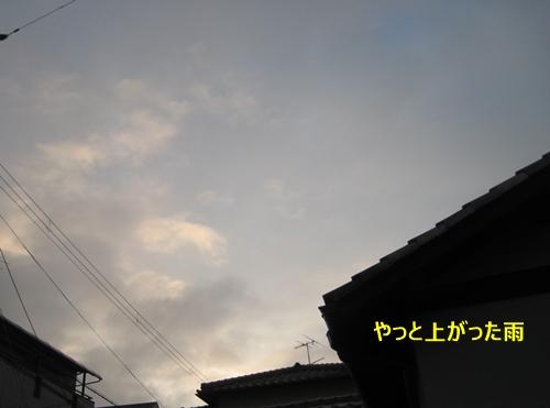 1雨上がり
