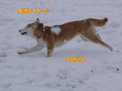 2走るフクちゃん
