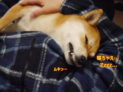 6寝ちゃお