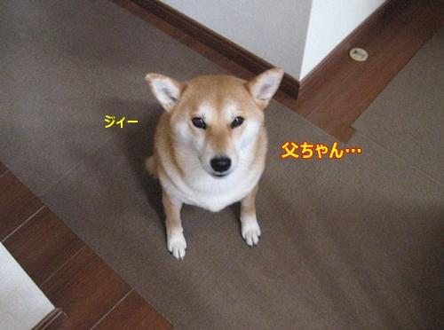 2015032301264250e.jpg
