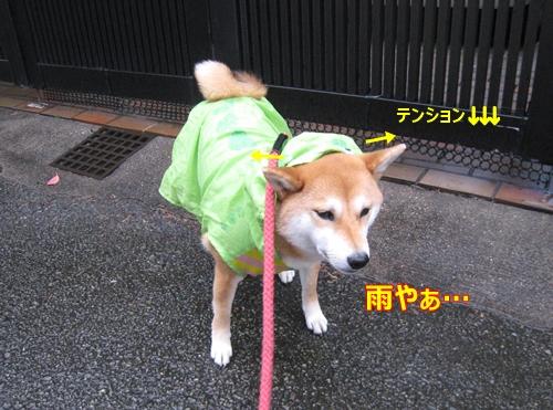 1雨のお散歩