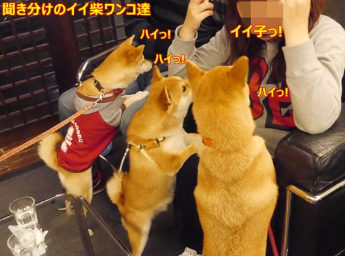 6素直な柴犬達