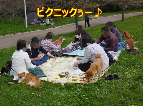 1ピクニック