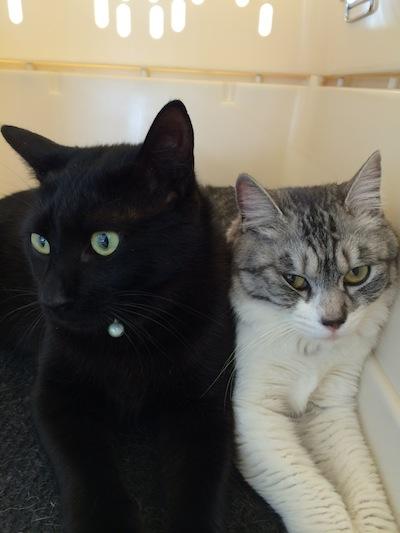 cats148.jpg