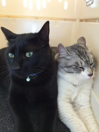 cats149.jpg