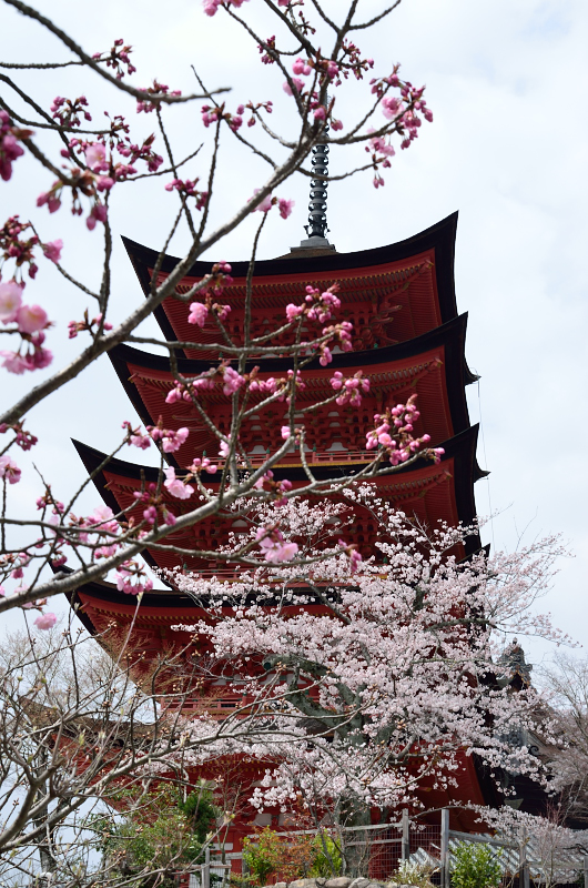 miyajima62.jpg