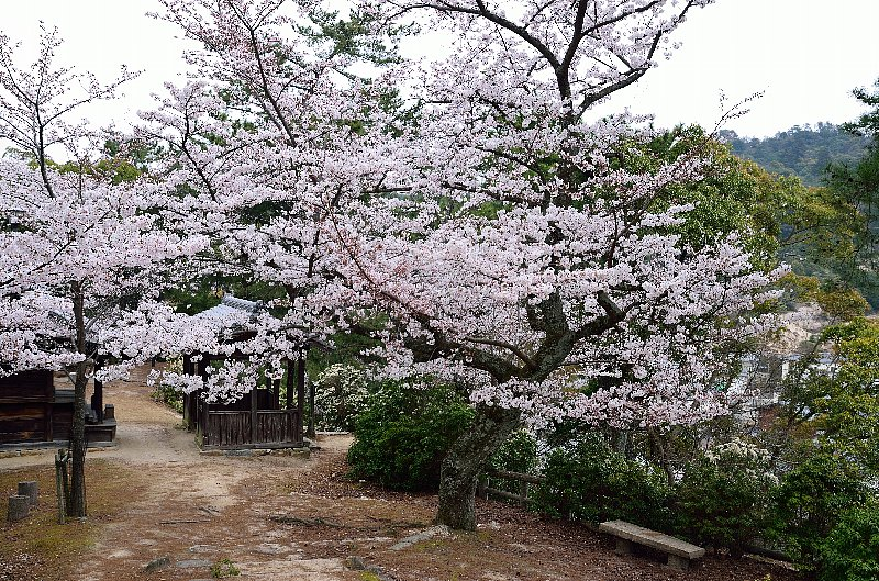 miyajima78.jpg