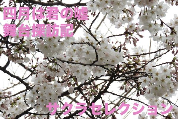 b_kimiuso_p_top.jpg