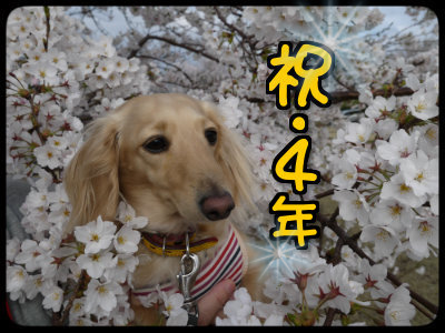 2015040916181953b.png