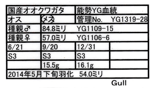 13Gull-19.jpg