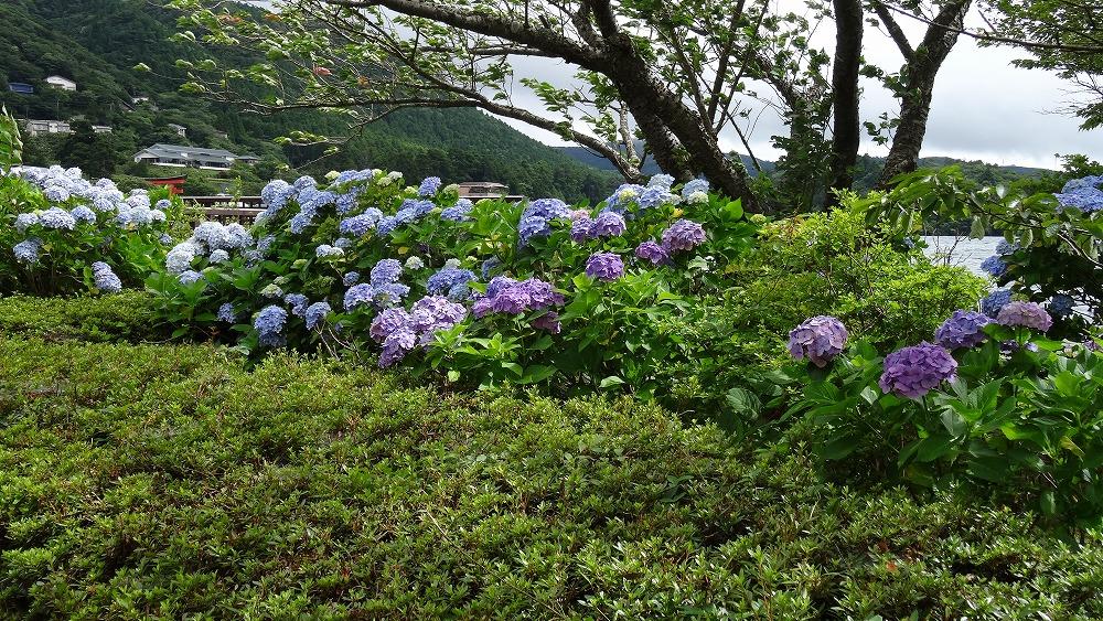 箱根観光 (2015年7月)