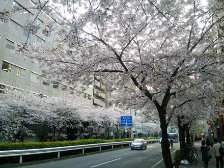 20150331_sakura.jpg