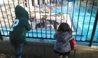 ペンギン見る