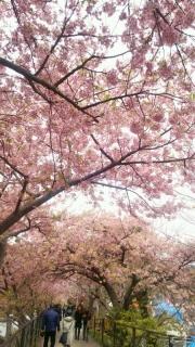 1桜アーチ