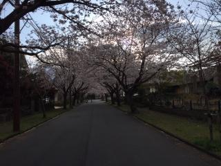 伊豆高原の桜_006