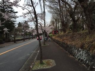 伊豆高原の桜_001