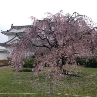 7姫路城 西の丸から
